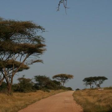 4 days camping safari Ngorongoro & Serengeti