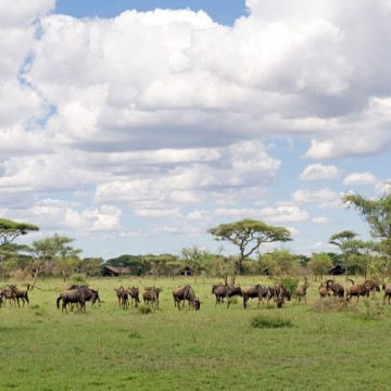 4 days Camping Ngorongoro & Serengeti