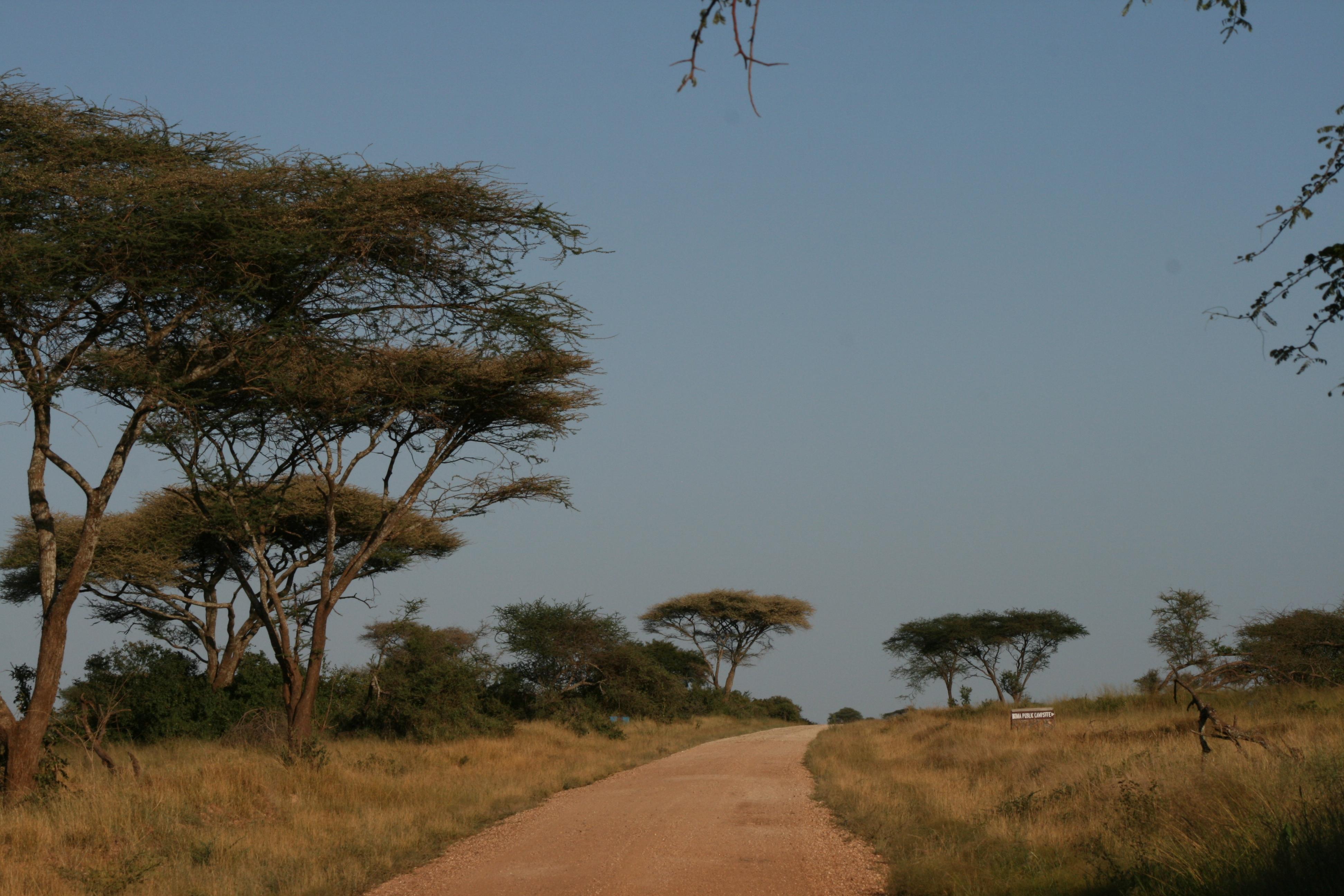 4 days camping safari Ngorongoro & Serengeti 1