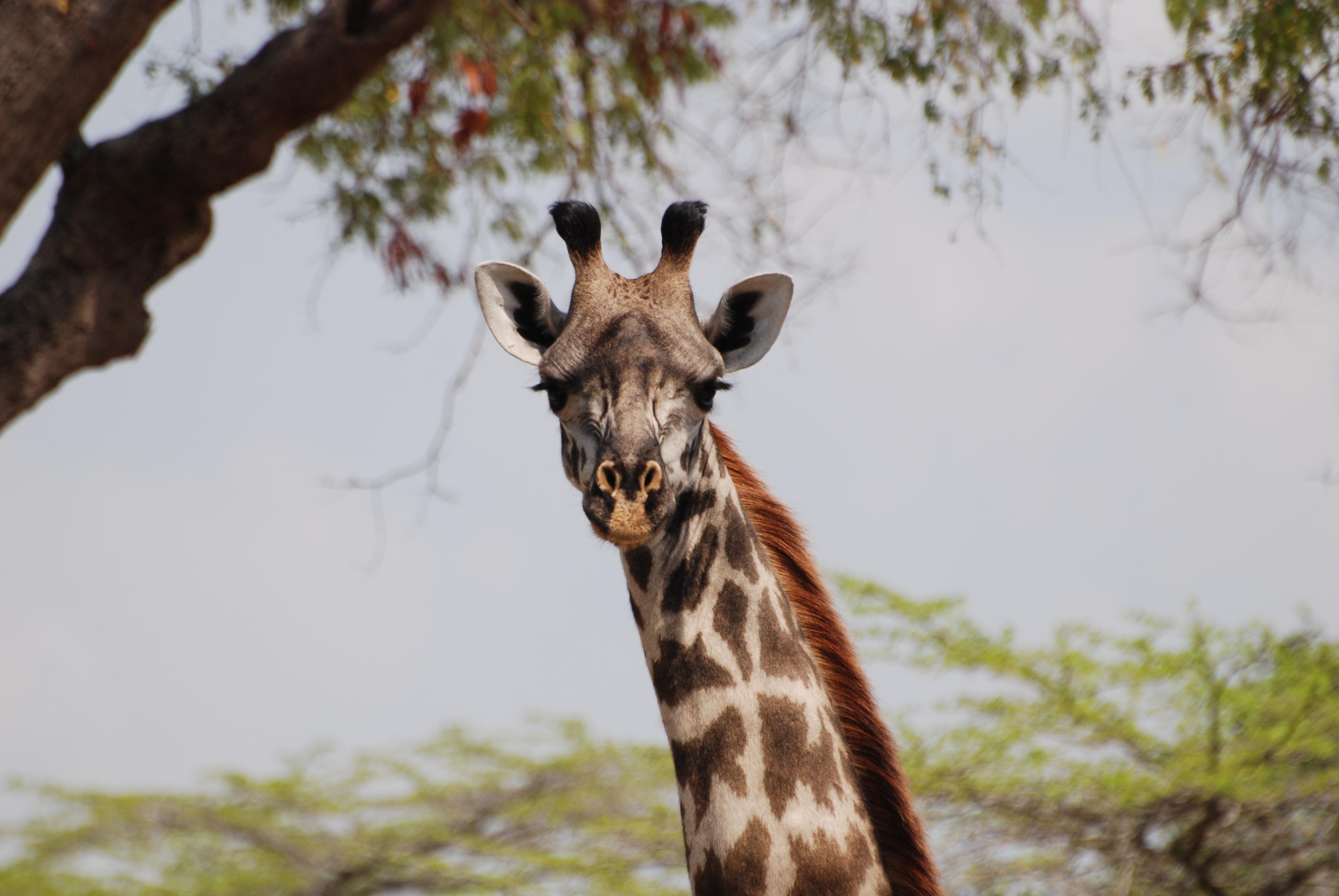 6 Days Safari Manyara, Serengeti, Ngorongoro 3