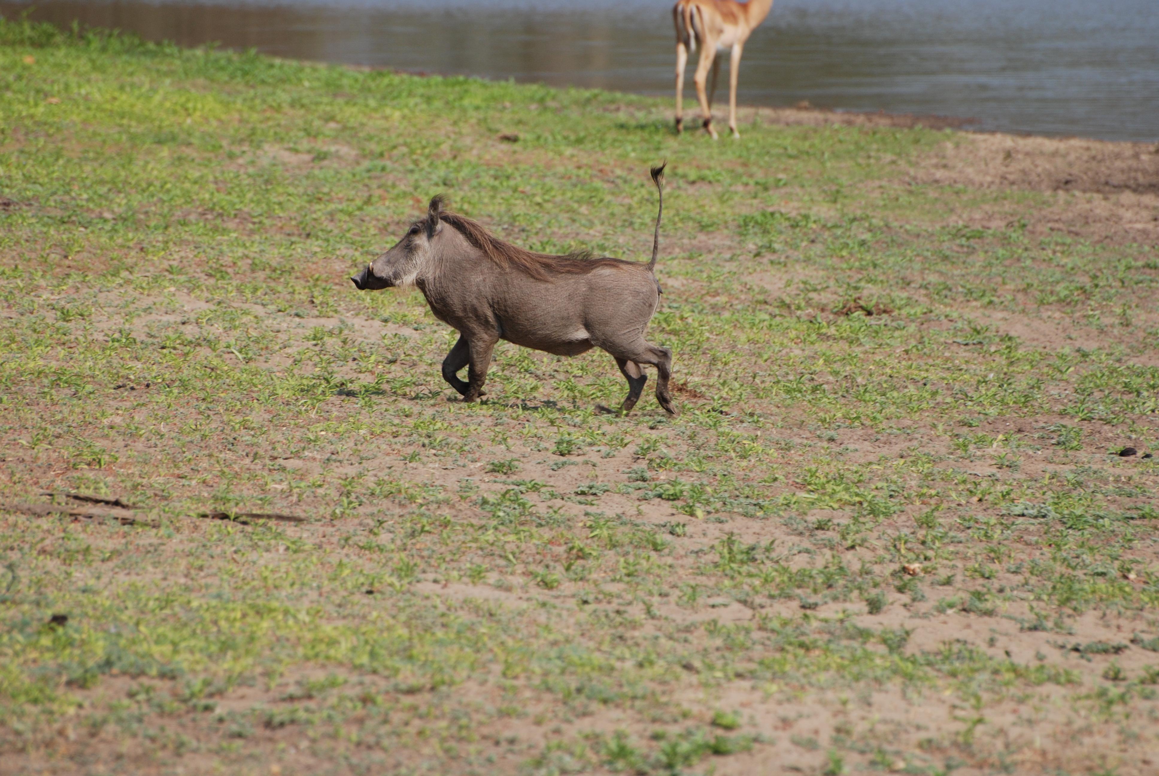 4 days camping safari Ngorongoro & Serengeti 2