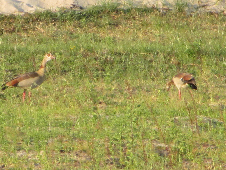 4 Days Camping  Manyara, Ngorongoro & Tarangi 2