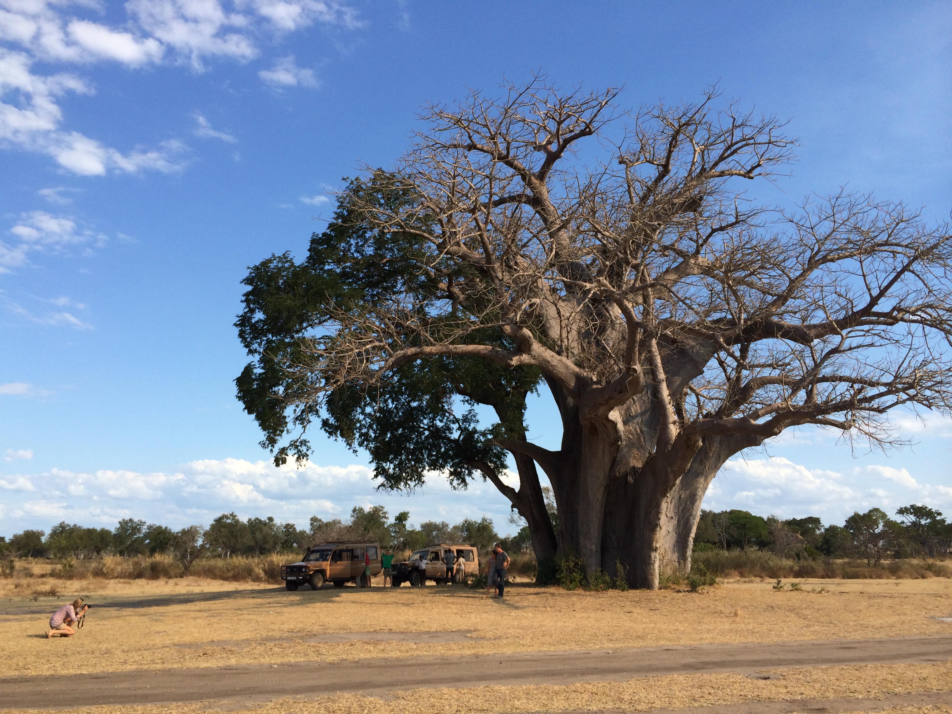 16 Days Malawi & Southern Tanzania  2