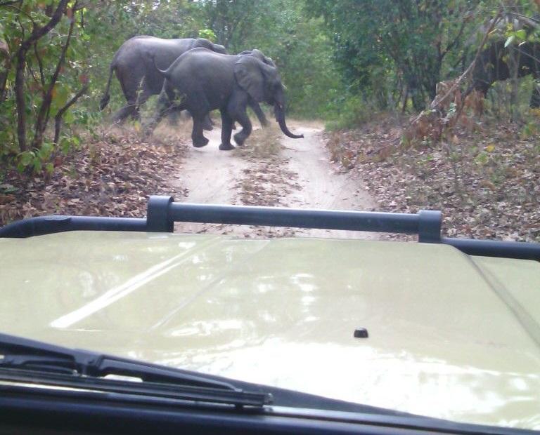 11 Days Gorilla tracking Uganda, Selous & ZNZ 3
